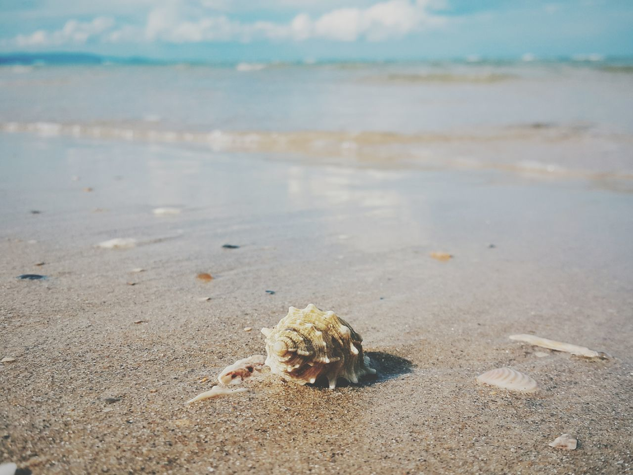 Stop!! Nature Relaxing Thailand Samsung Galaxy Note 4 Sea Landscape Sand Snail