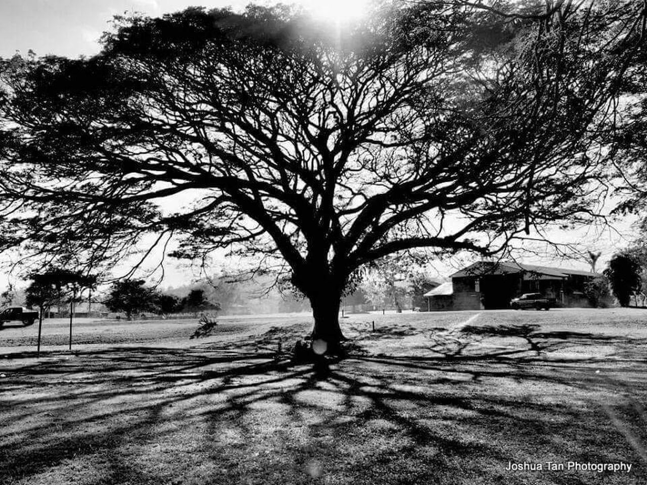Gianttree Shadows & Lights Adventistuniversity Papuanewguinea Moresby Nature Photography Treescape