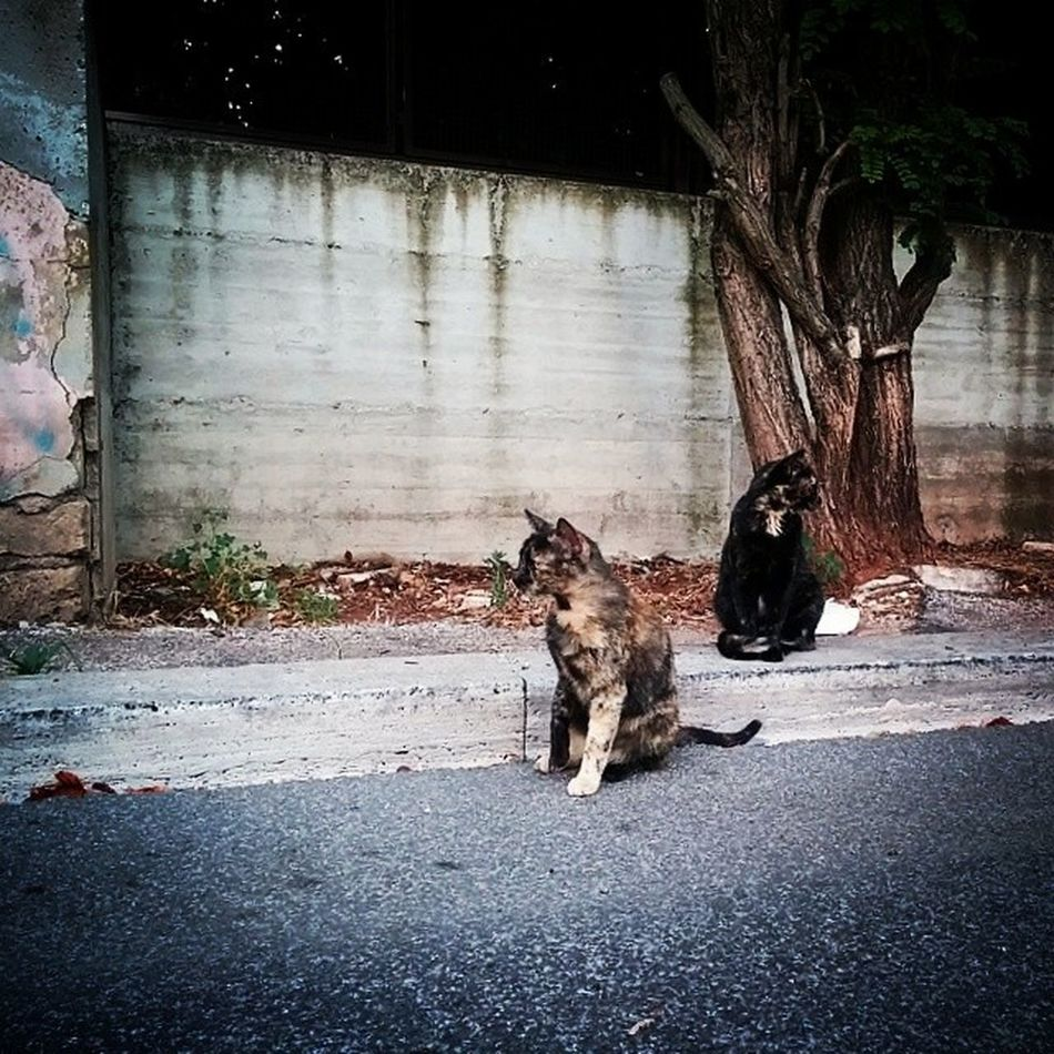 #Cat...which #way? #Left or #right? #Gatto #look #opposite #direction #where to? #Dove #guardare #Pater84