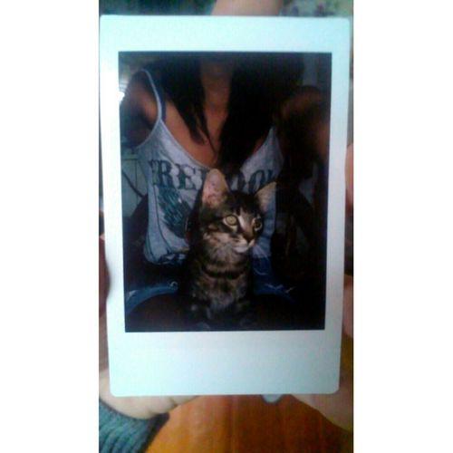 RIP :( My Kitty <3