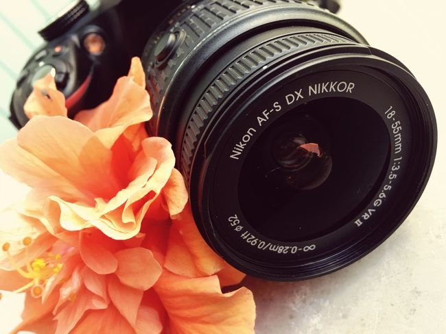 Camera Nikonphotography Nikon D3300 Flower Hibiscus Hibiscus Flower Photography Orange Orange Color Camera And Flower Nikon Camera
