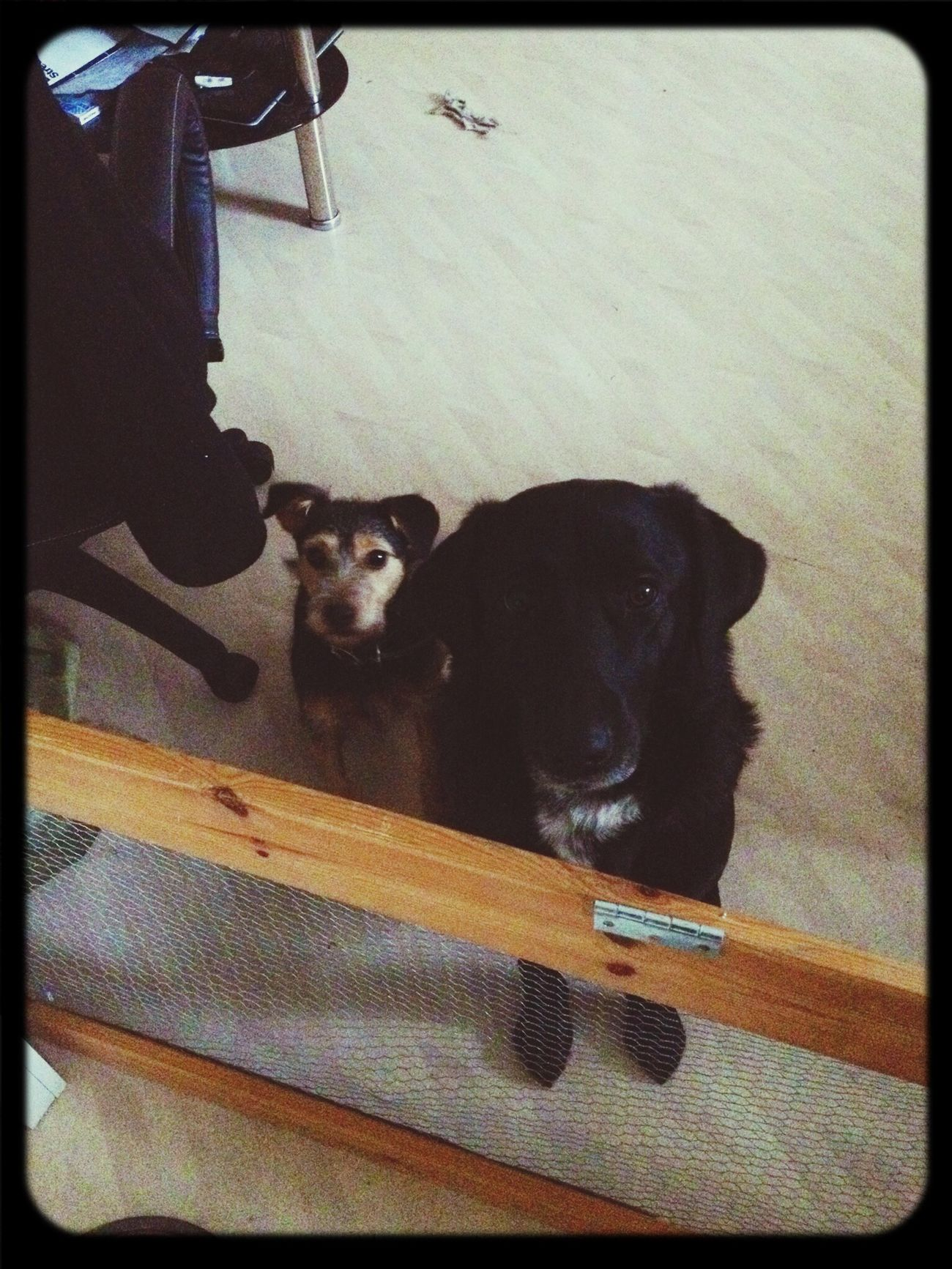 Två hungriga tjejer My Dog  Dog