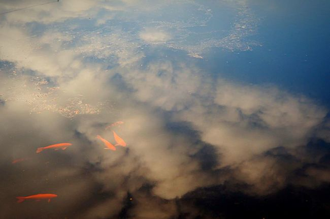 池 の鯉を 撮ってみた 。 Snapshot EyeEm Japan