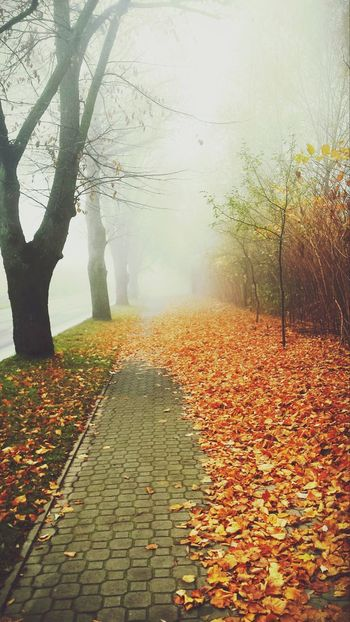 Autumn Leaf Change Nature Tree Weather No People Scenics Beauty In Nature Outdoors Water Fog Day Sunlight Rural Scene Red Multi Colored Sky Close-up Pixelated The Great Outdoors - 2017 EyeEm Awards