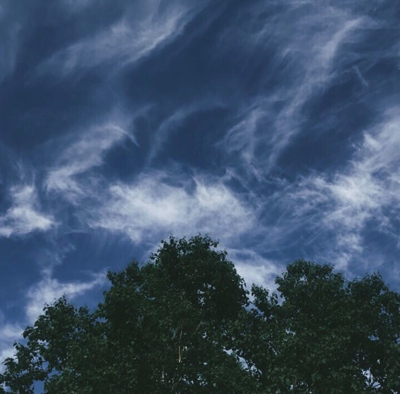tree, sky, low angle view, nature, no people, beauty in nature, cloud - sky, outdoors, scenics, day, blue