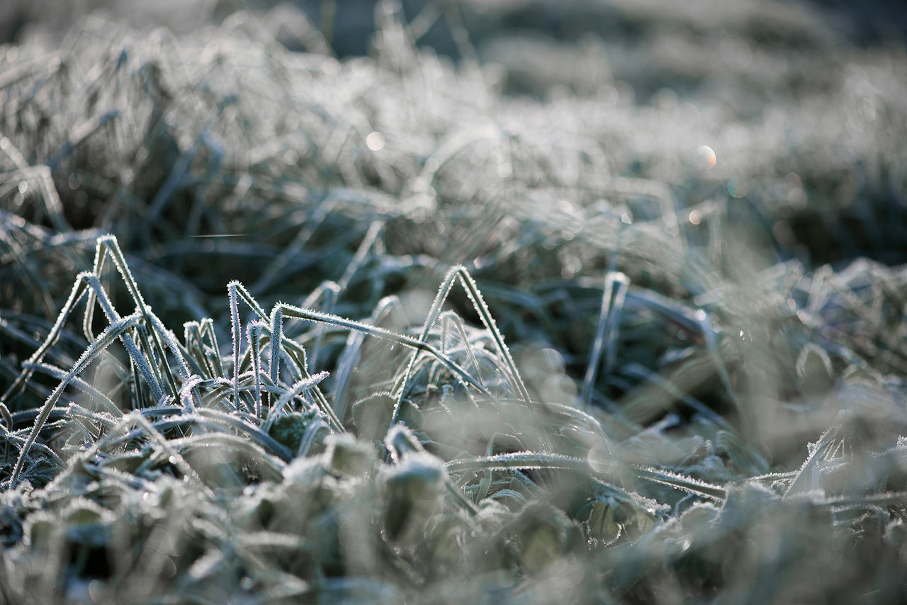 Morning frost in my garden,Krimulda,Latvia Art Cold Cold Temperature Dreaming EyeEmNewHere Fantastic View Flower Frost Frosty Frosty Morning Frosty Mornings Grass Ice Leaves Macro Morning Light Multi Colored Nature Nature Art Nature Photography Nature_collection Red White