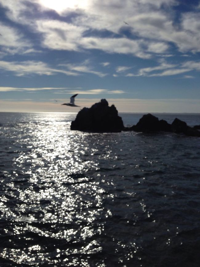 Birds In Flight Seascape Sea And Sky Bird Photography Sky And Clouds