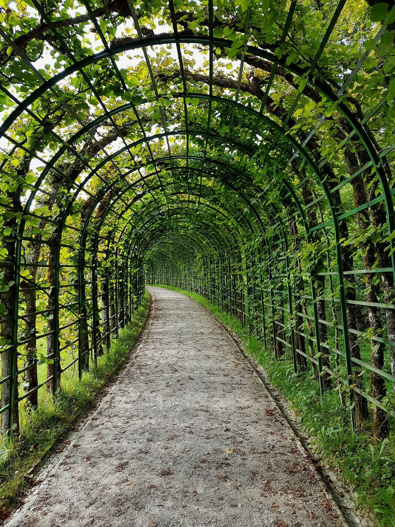 Arch The Way Forward Growth Plant Diminishing Perspective Day Pergola Outdoors Tranquil Scene Archway Creeper Plant Curve Nature Tranquility Arched Green Color Repetition Tunnel Footpath Scenics Beauty In Nature Travel Destinations Green Color First Eyeem Photo First Eyem Photo