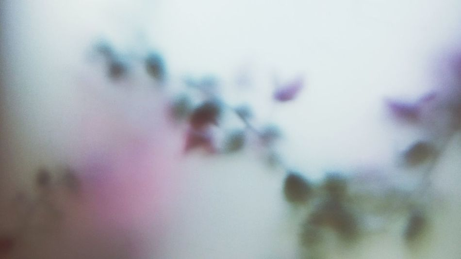 Flower Indoors  Flowers Outoffocus Backgrounds Romantic White Pink Color Posters Poster Window Winter Spring Springtime
