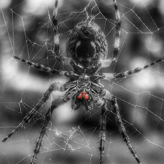 Nature_perfection Redeyes Eyered Spiders Selective Color Taking Photos Blackandwhite Photography Spring EyeEm Best Shots You And Me Against The World Daddy Daughter Time Face To Face EyeEm Gallery Enjoying Life Black & White Showcase April Closeupshot Hello World Eyemphotography My Photography Nature_collection Naturally Beautiful