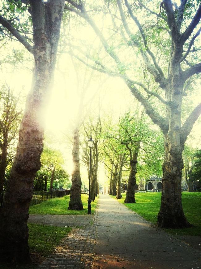Magical sunlight through the trees