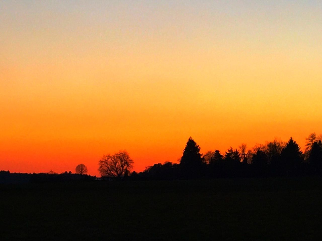 silhouette, sunset, nature, landscape, tranquil scene, orange color, tree, beauty in nature, tranquility, scenics, clear sky, no people, outdoors, sky