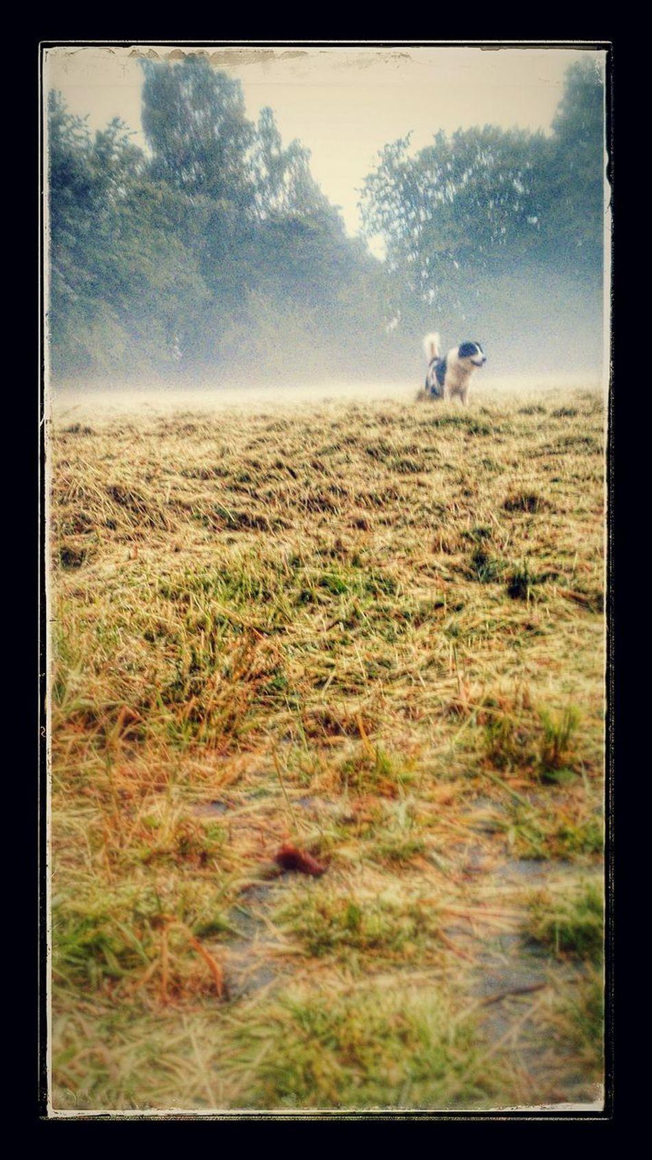 In Erinnerung an Casper! Field Nature Landscape Grass Draußen Im Grünen Dog Photography Hundefotografie Outdoors