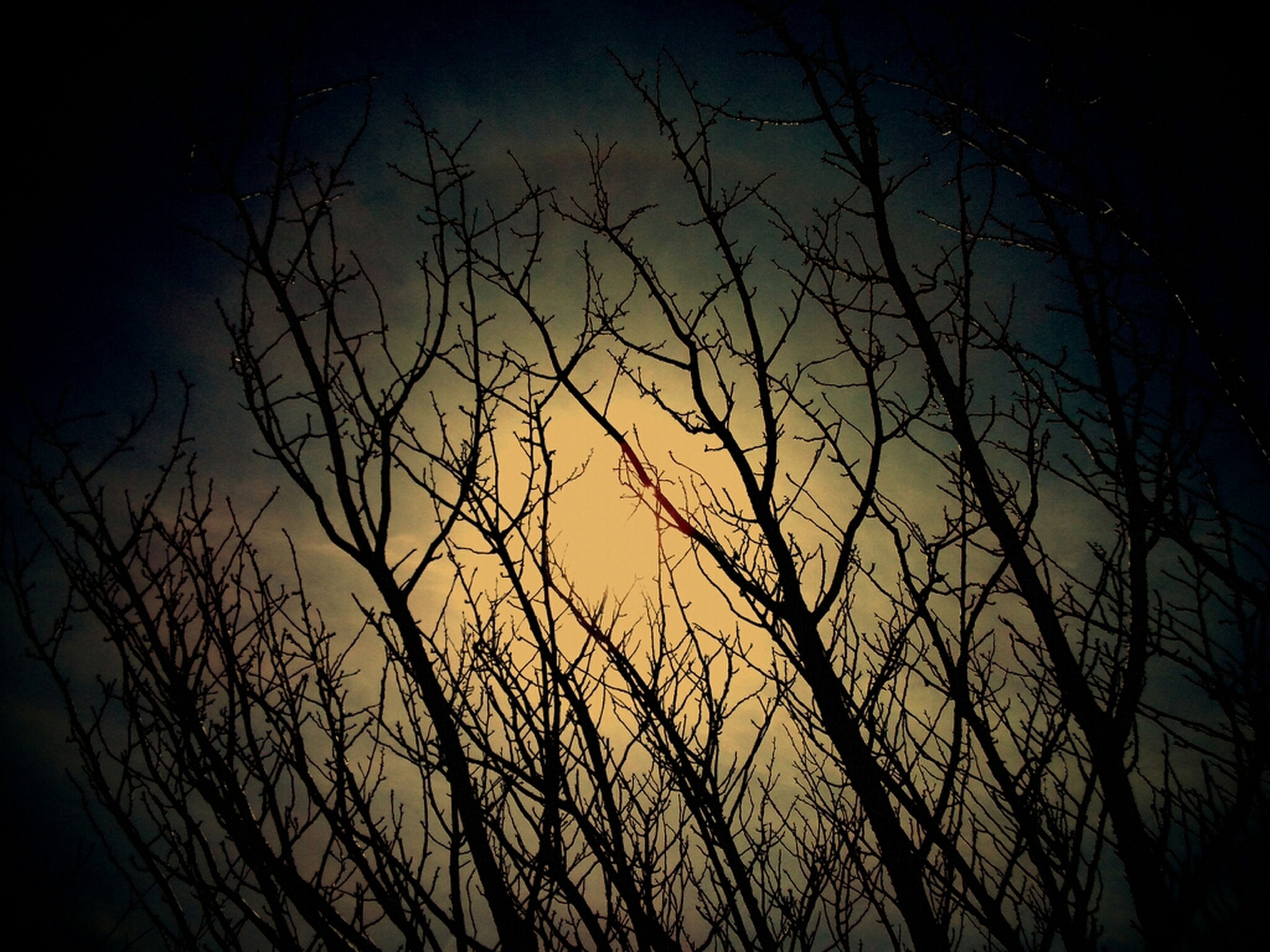 bare tree, branch, silhouette, low angle view, tree, sky, night, tranquility, nature, beauty in nature, dusk, scenics, dark, outdoors, clear sky, growth, tranquil scene, no people, sunset, moon