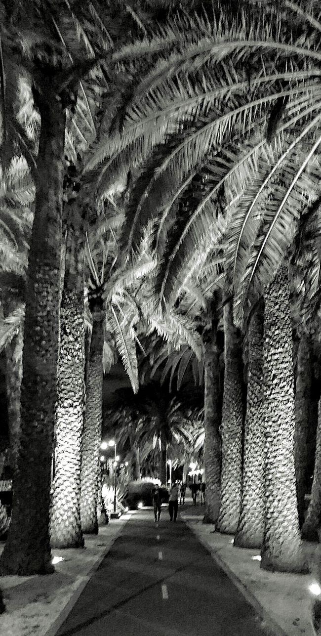 Path through the trees Tree Trunk Trees Bark Texture Black And White XperiaZ5 Lenka Perth Australia
