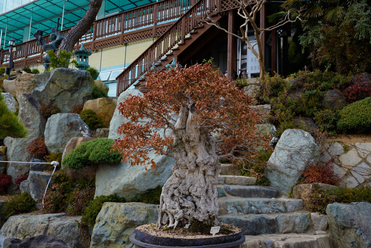 architecture, rock - object, built structure, plant, growth, day, travel destinations, nature, building exterior, outdoors, no people, tree, flower, statue, beauty in nature, water