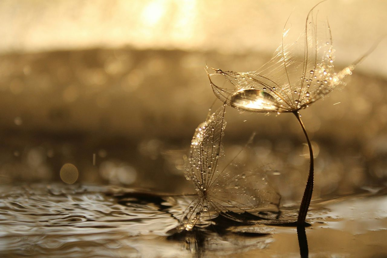 Beautiful stock photos of rain, Day, Dew, Drop, Fragility