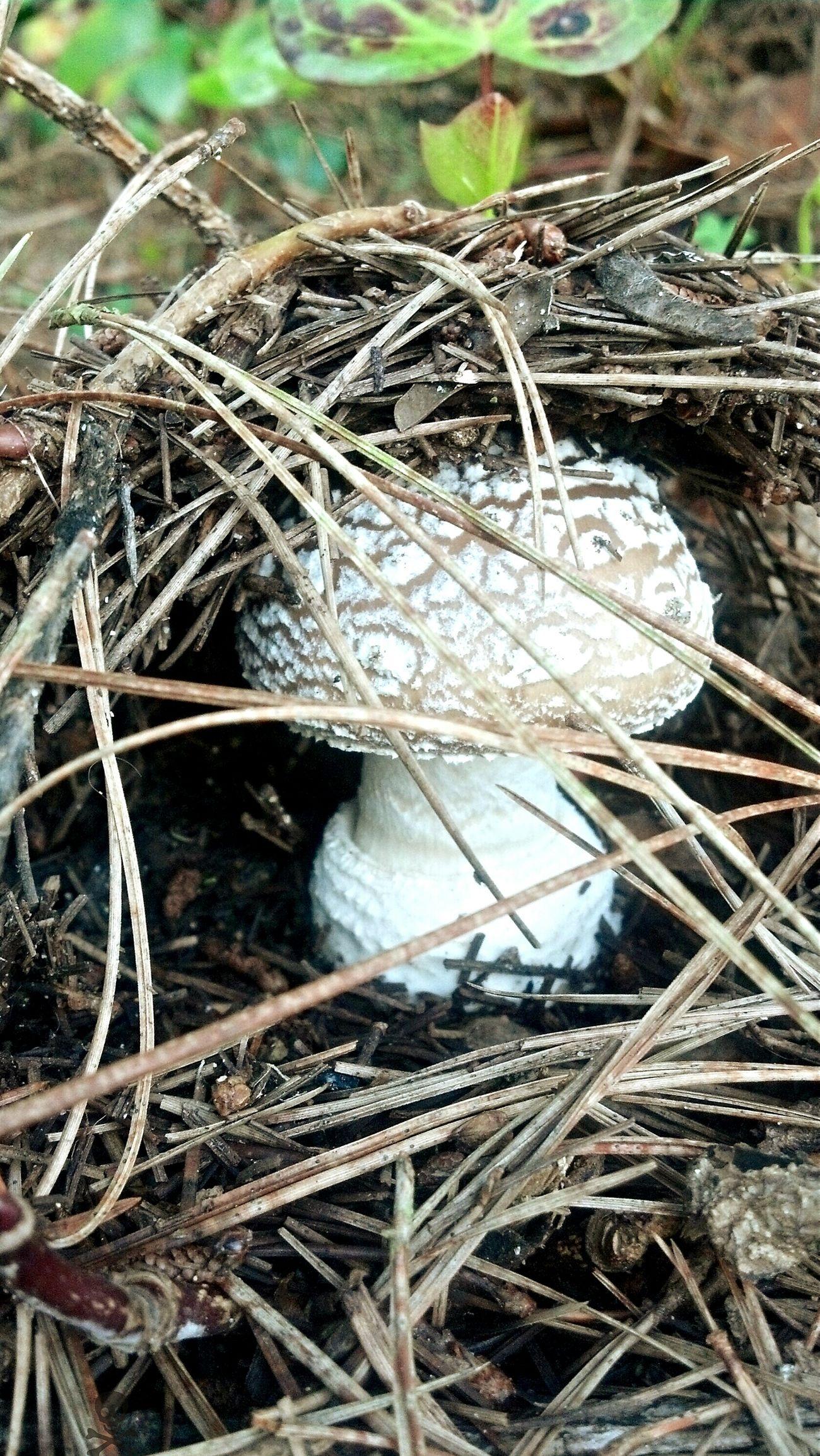 Mushroom Shroomin' EyeEm Nature Lover