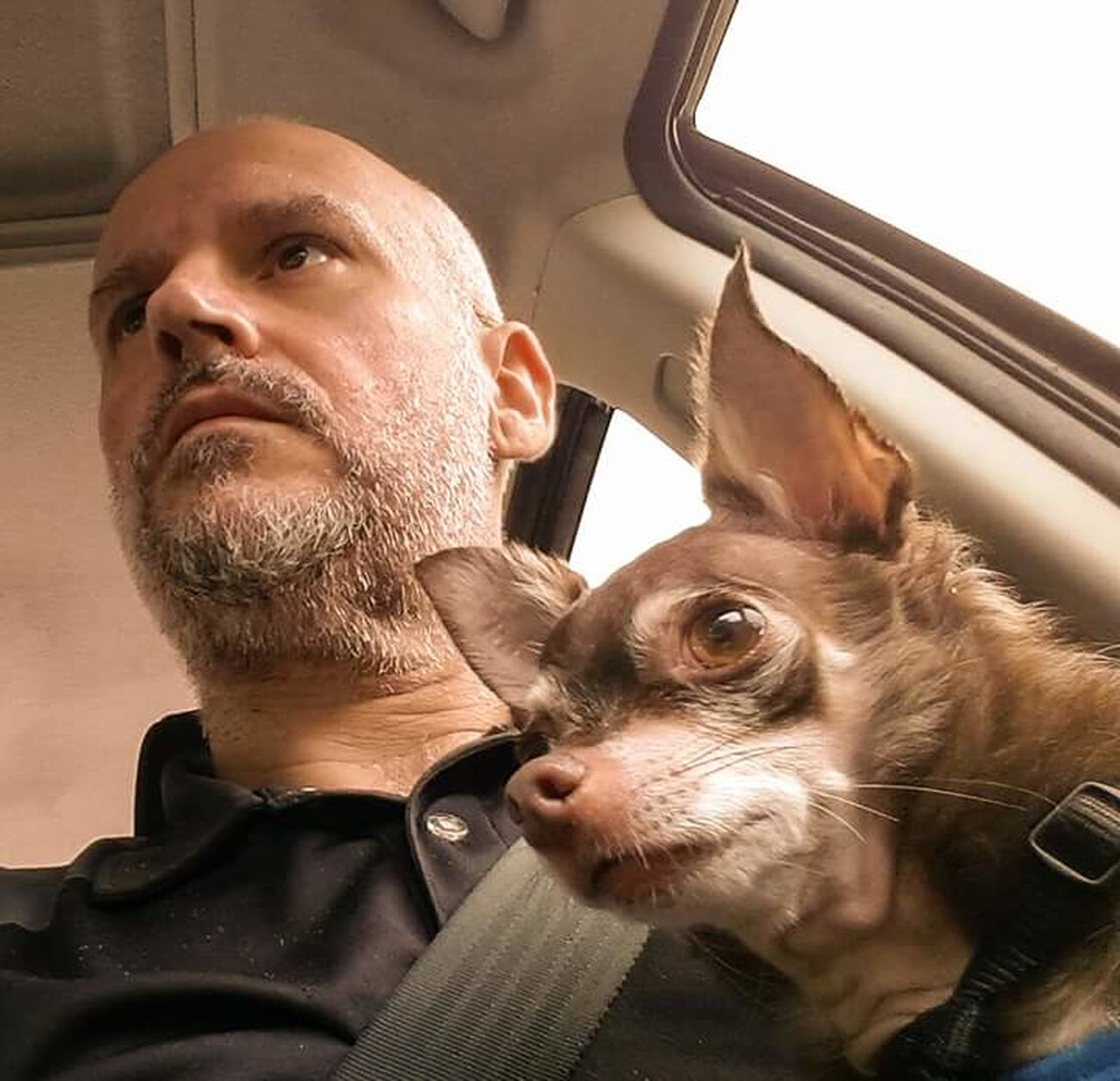 Partners In Crime Odie Cu-Jose My Dogs Are Cooler Than Your Kids Chihuahua Lovers Chihuahuas<3 Chihuahua My Best Friend Happy Dogs My Life ❤