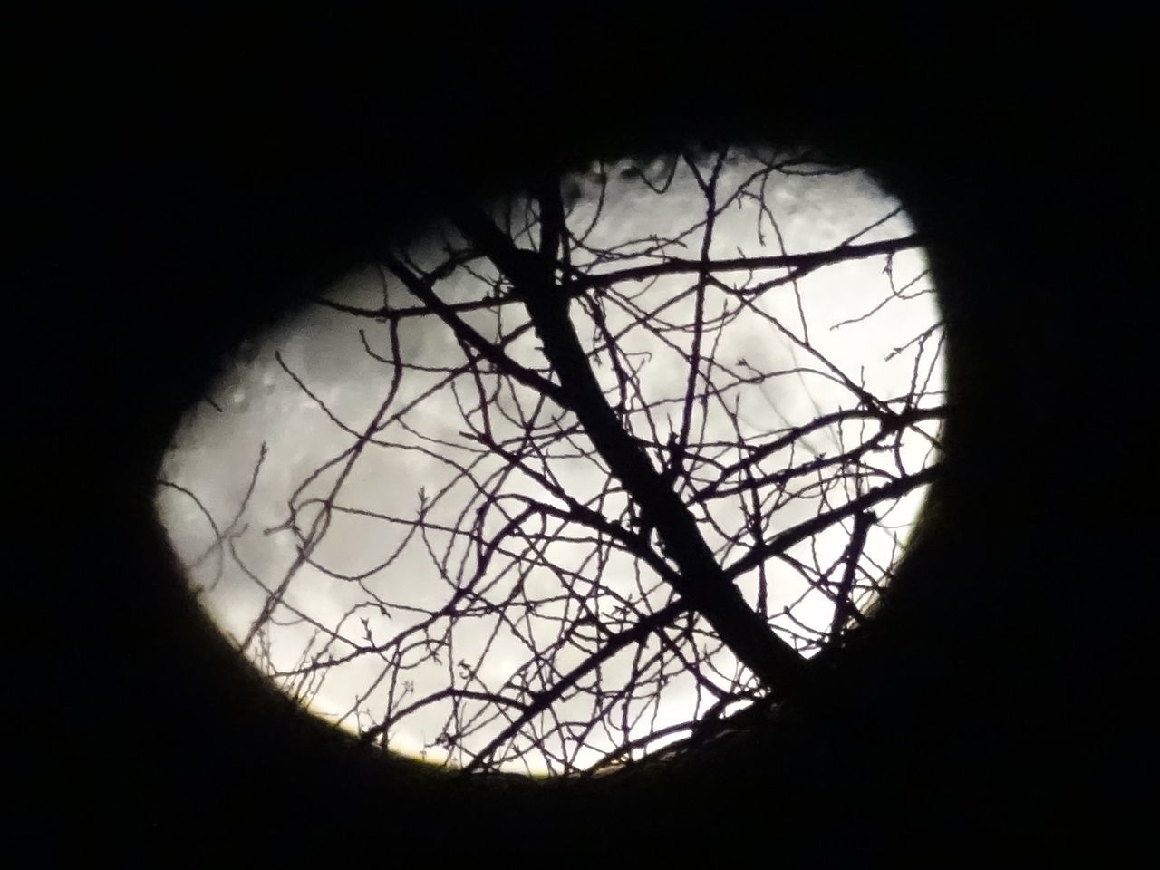 silhouette, circle, no people, close-up, outdoors, nature, day, tree, beauty in nature, sky