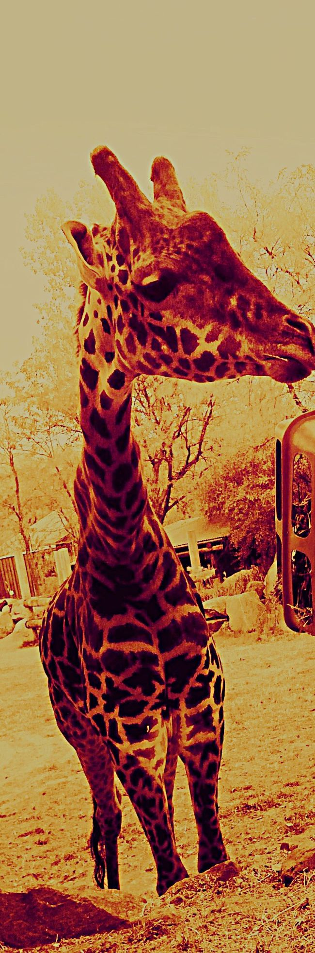 Zoo Day Animals Eyelashes Checking Me Out I Feel Short. ^·^ Short Girl Problems