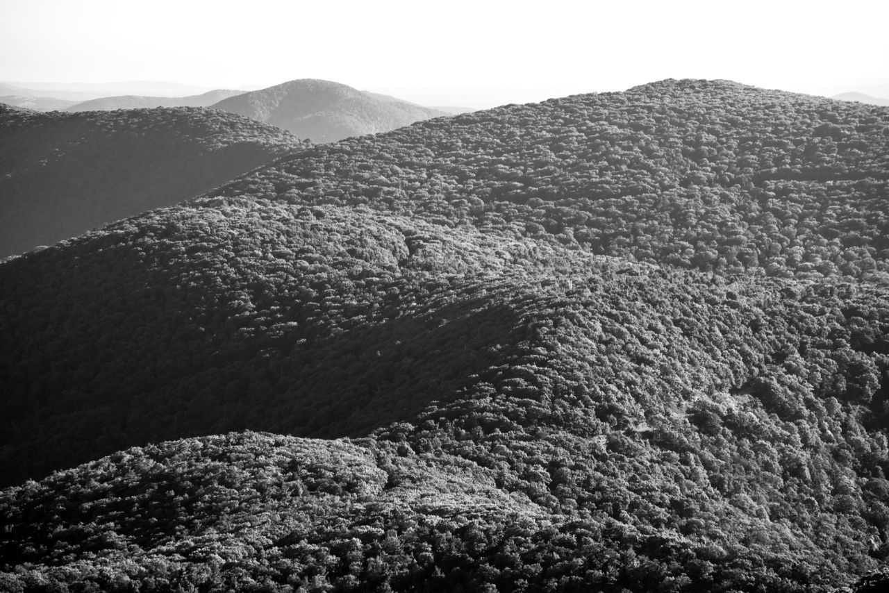 Appalachian Mountains Appalachians Beauty In Nature Black And White Day Forest Landscape Light And Shadow Mountain Mountain Range Nature No People Outdoors Rolling Hills Scenics Shenandoah National Park Texture Tranquility Trees