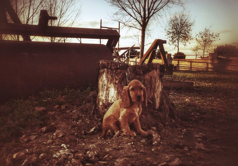 Showcase: February Dog Life Dog Countryside Italy Alone Sad Country Living Cockerspaniel