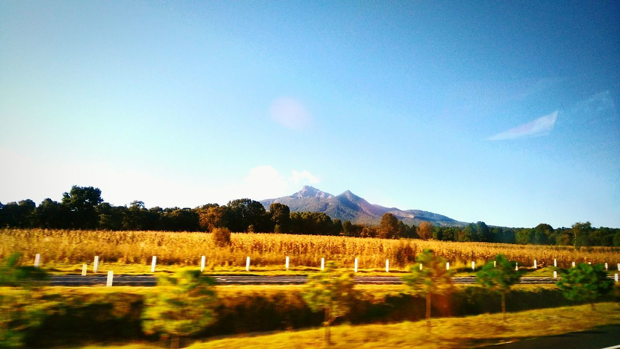Life in Yellow... Landscape Tranquil Scene Tranquility Tree Blue Scenics Countryside Sky Mountain Non-urban Scene Agriculture Field Nature Rural Scene Mountain Range Farm Alone Time Grandview EyeEm Gallery Huaweig7 Taking Photos Mountain Peak Panorama Road Greatlife