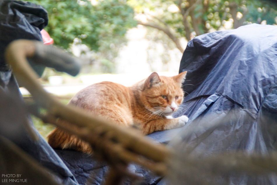 Homeless Cats Spring Nature Animal Themes Cat