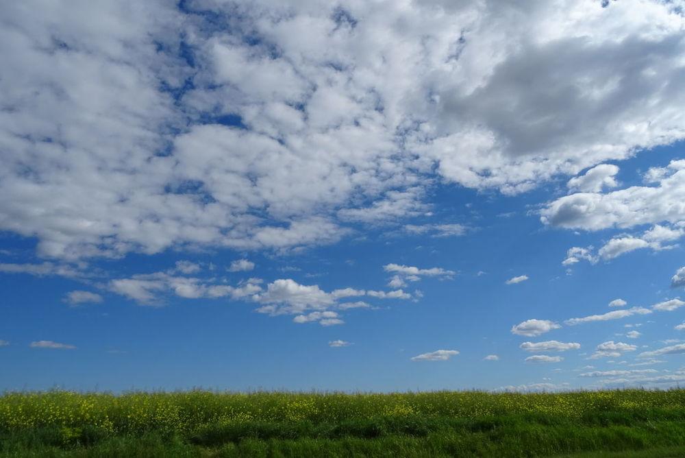Cloud - Sky Nature Blue Beauty In Nature Sky Rural Scene Agriculture Colza Culture Ciel Beauty In Nature Nuages Et Ciel Nuages Nature