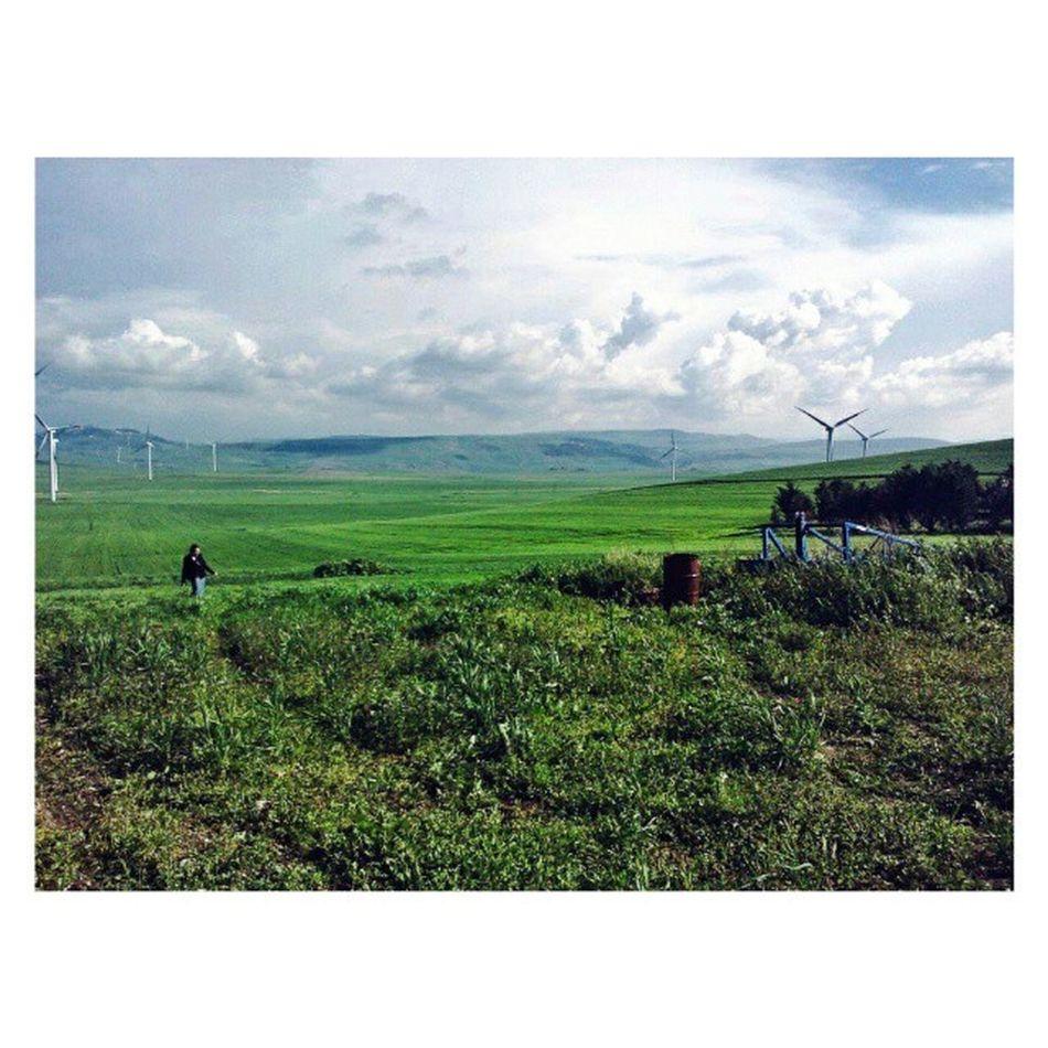 Ricordo ancora lo stupore quando, per la prima volta un anno fa, mi apparve questo paesaggio: centinaia di mulini a vento sparsi su infinite colline verdi...Che sensazione surreale di libertà! Certo una foto non può raccontare l'emozione che si prova a stare in quei luoghi. Per me, che sono cresciuta in una grande città grigia, era come vivere un sogno. Thisispuglia Puglia Dasogno Accadia foggia colline verde campagna campi muliniavento dream apulia ig_puglia_ ig_foggia vivofoggia vivopuglia loves_puglia ig_puglia italia_landscape spring green italy southernitaly versosud italia visitpuglia visititaly instapulia paesaggi_ditalia igersfoggia