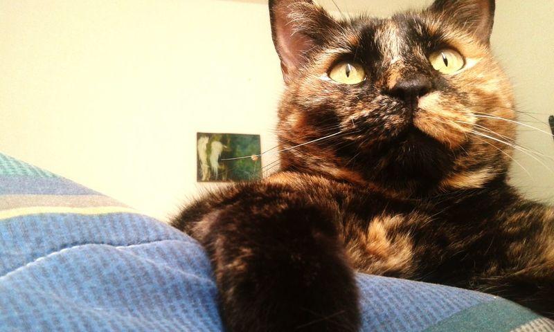 Cat♡ Cat Lovers I Love My Pet Gatosfelizes Happy Cat