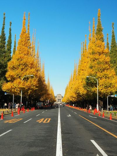 Blue Tree Road Sky Taking Pictures From My Point Of View Blue Sky Road Taking Photos Nature Ginkgo Tree Too Many People!!!!! Fallen Leaves