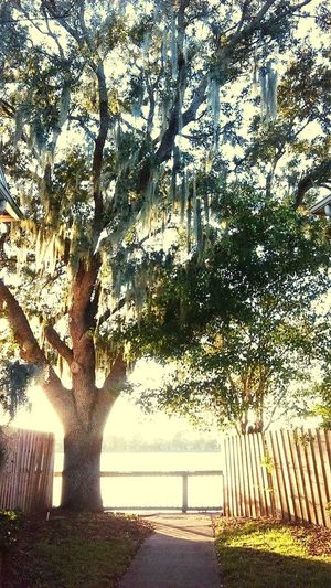 Showcase: December Beautiful Nature Nature_collection Spanishmoss Trees WoodLand Outdoor Photography Simplyscenic Simplyscenic_photography