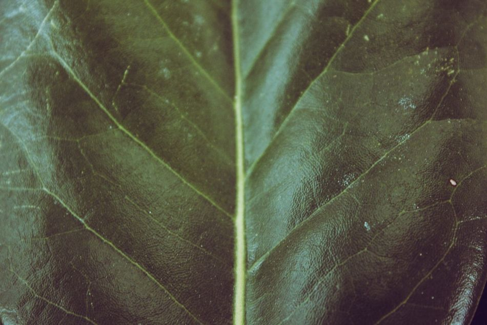 Leaf Full Frame Backgrounds Close-up No People Nature Outdoors Day Fragility Green Color Green Pattern Patterns Texture Art Is Everywhere