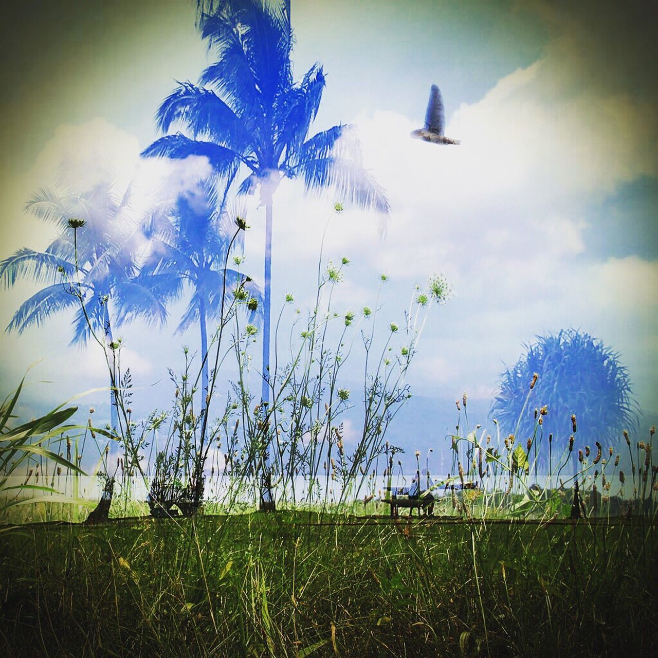 Cut And Paste Nature Beauty In Nature Outdoors Landscape Sky Birds Palm Trees Trees Trees And Sky Tranquil Scene Superimpose Seaside
