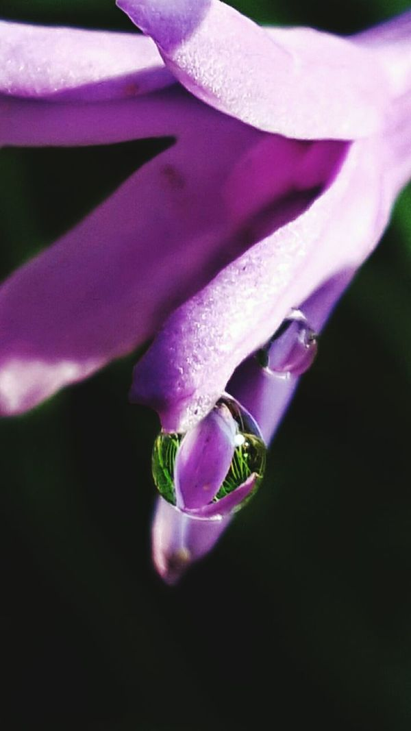 Water Color's Of Nature Color Palette Freshness Flower Purple Beauty In Nature Drop FreshBokeh Photography Cwpearcygerman Refraction Fragility Close-up Creative Use Of Light Low Angle View Focus On Foreground Maximum Closeness After The Rain Wet Dramatic Perspective