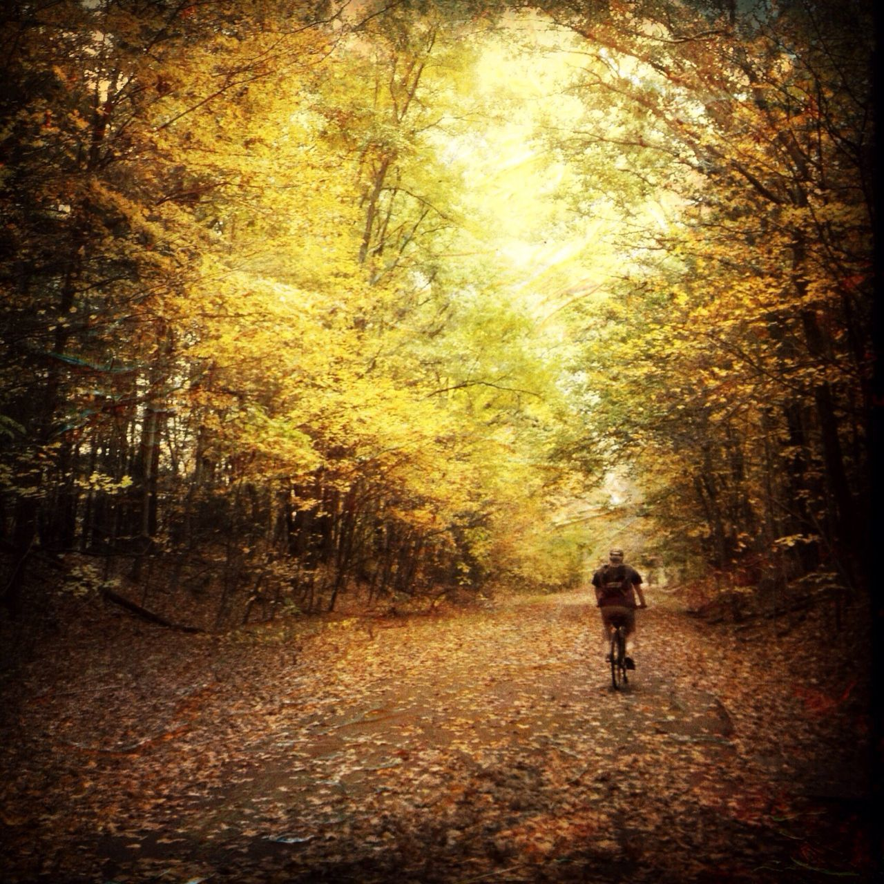 The Calmness Within Autumn 2014 Lone Biker Yellow