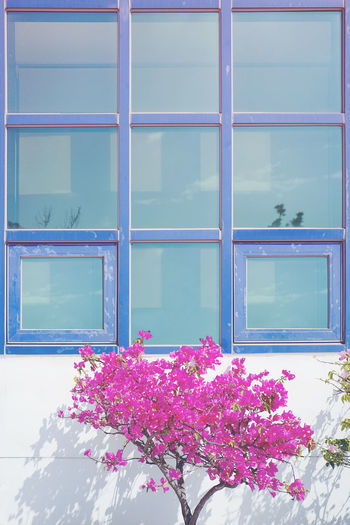Architecture Beauty In Nature Building Exterior Built Structure Close-up Day Flower Flower Head Fragility Freshness Growth Nature No People Outdoors Pink Color Purple Window Windowframe EyeEmNewHere