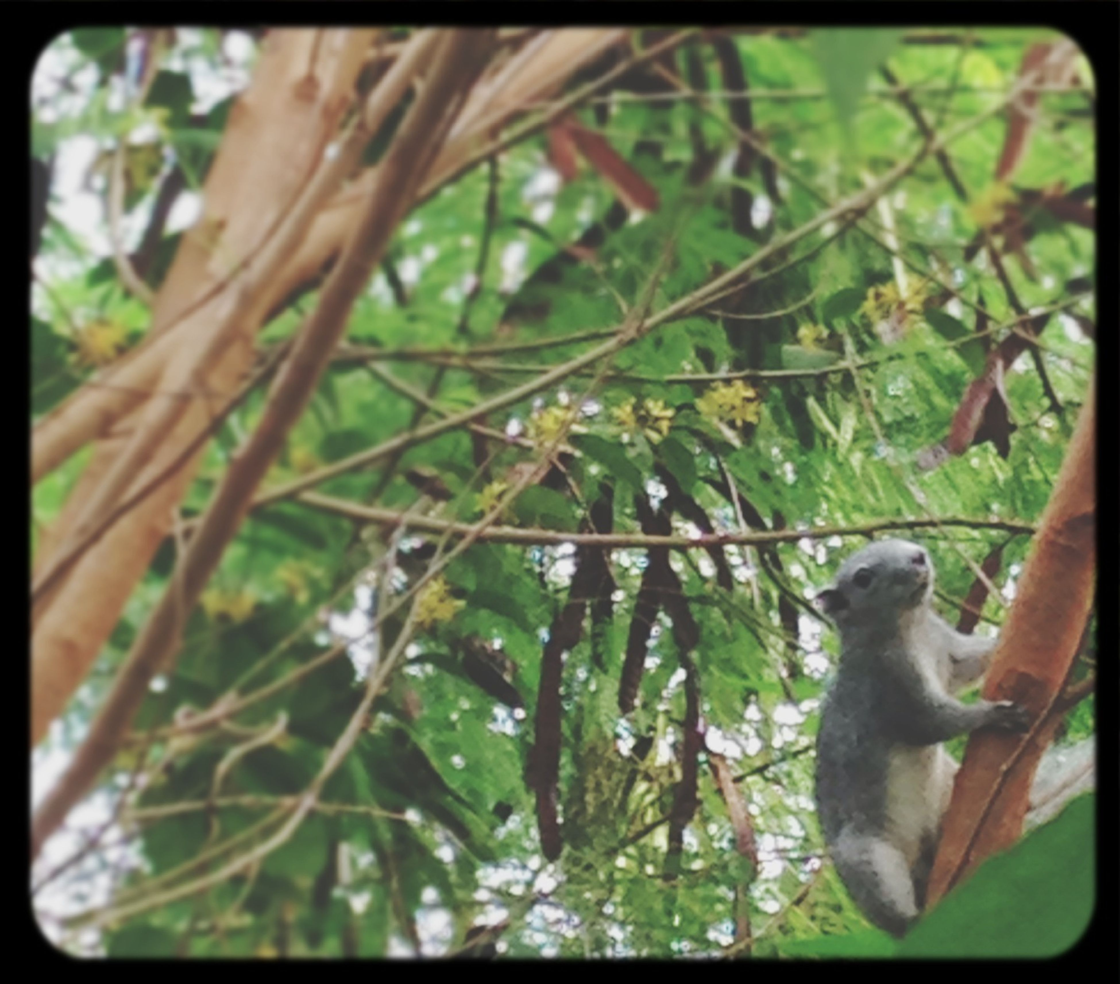 animal themes, one animal, wildlife, transfer print, animals in the wild, branch, tree, auto post production filter, mammal, forest, focus on foreground, nature, selective focus, day, close-up, outdoors, no people, bird, growth, green color