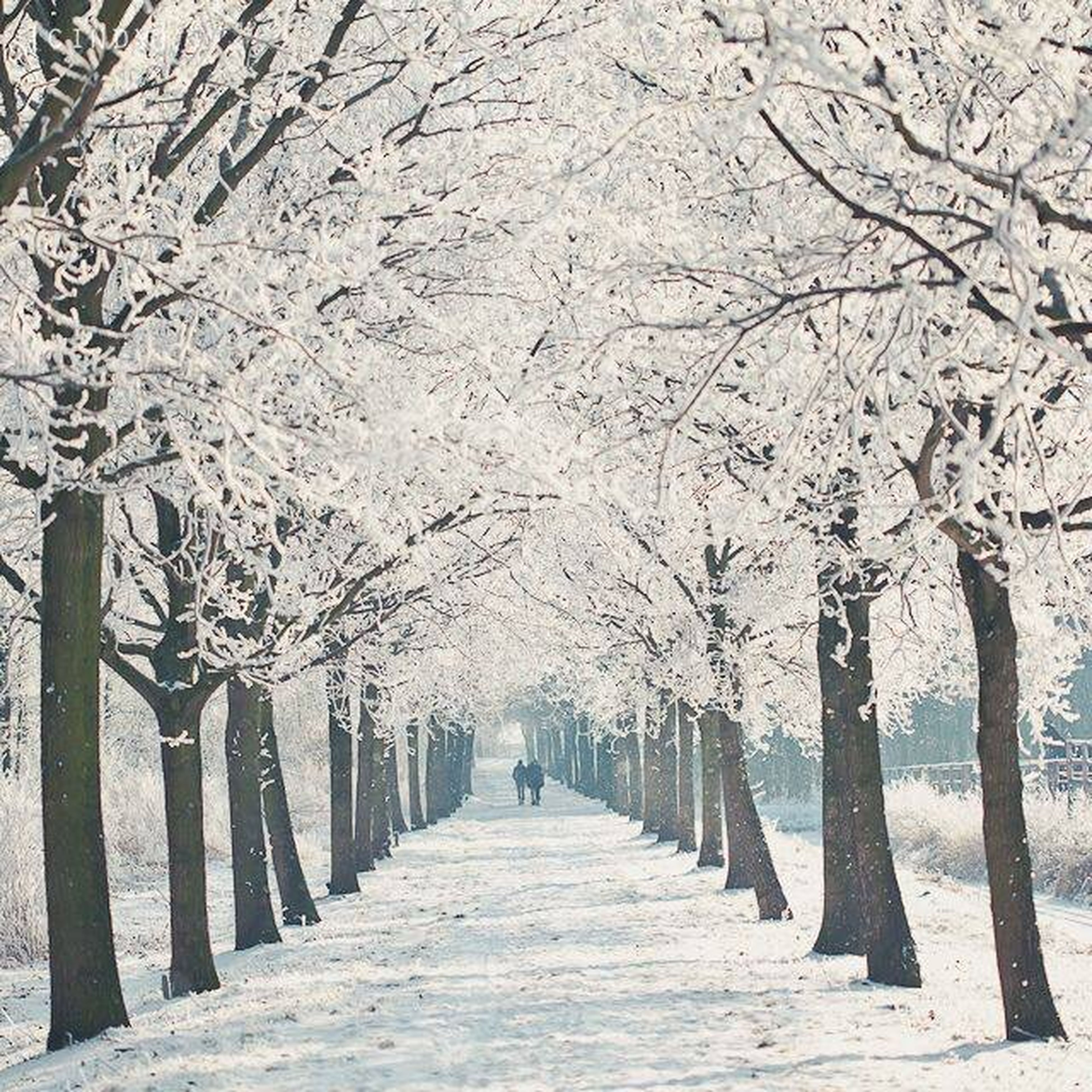 The summer is definitely over now ? Now wishing for a white winter ❄️⛄️