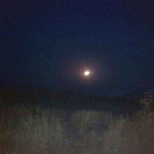 Moon Fullmoon Summernight Eye4photography  EyeEm Gallery Eyemnaturelover Eyemphotography Followme Follow4follow Likeforlike