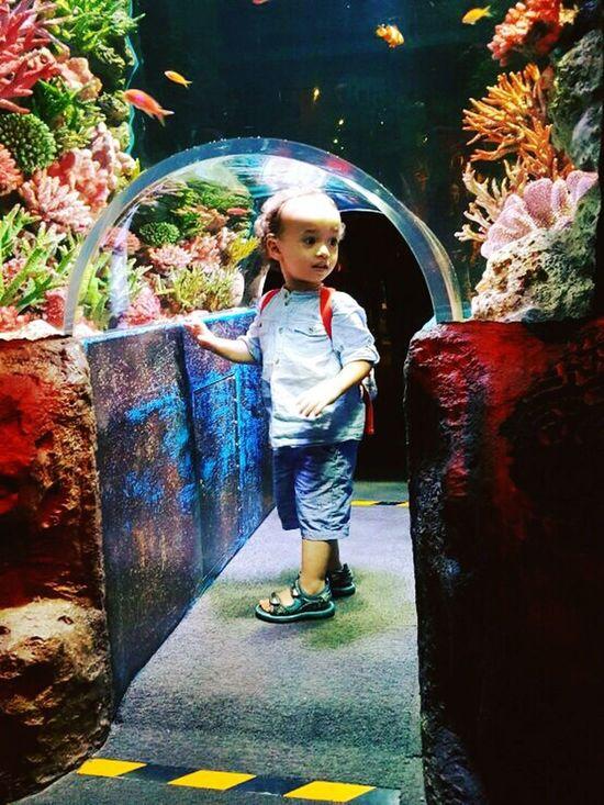 Sealife SiamOceanWorld SiamParagon Underwater World Thailand Bangkok Jettsiraberg