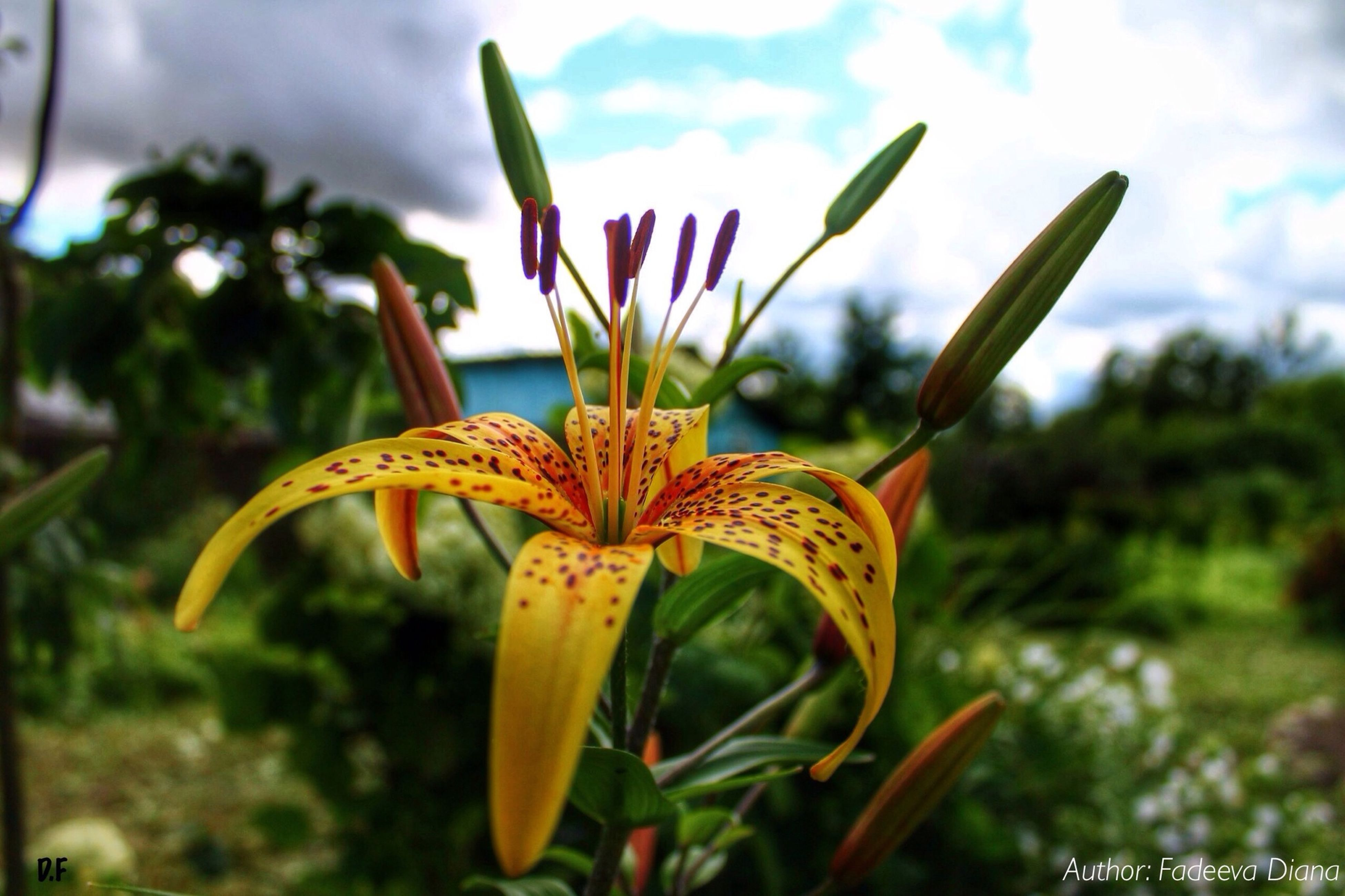 growth, focus on foreground, close-up, flower, plant, freshness, fragility, beauty in nature, nature, sky, green color, field, leaf, yellow, stem, bud, petal, day, selective focus, flower head