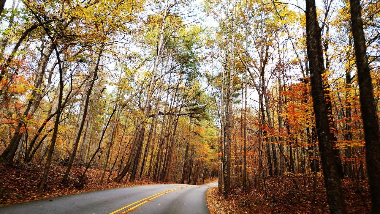 Tree Road Transportation No People Outdoors Forest Nature Day Scenics