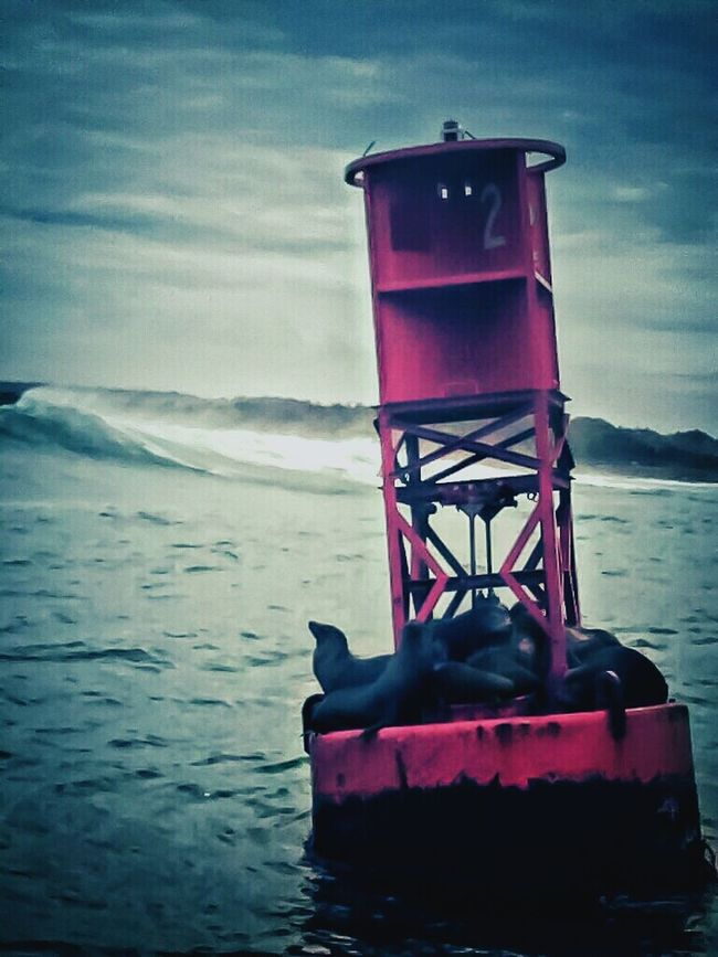 Northcoast Mendocinoheadlands Surf's Up Pacificocean Ocean Photography Fortbraggphotographer Naturelovers Eyeem Northen California FortBraggCA Marine Animal Seals On Buoy Nature Photography Unrealistic