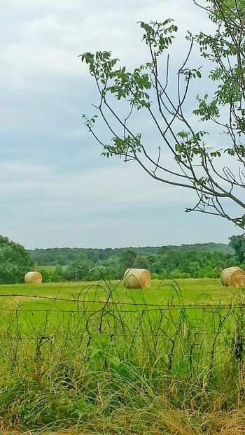 The Great Outdoors - 2016 EyeEm Awards Hay Bales Hey Field Pasture Land Round Hay Bails Hay Bails Cow Food Animal Food Sunny Day Green Grass Old Rusty Fence Old Rusty Barbwire Cow Pasture Sunshine On Hay Bails Outdoor Photography Landscape Treescape Treeline Landscape_photography The Essence Of Summer