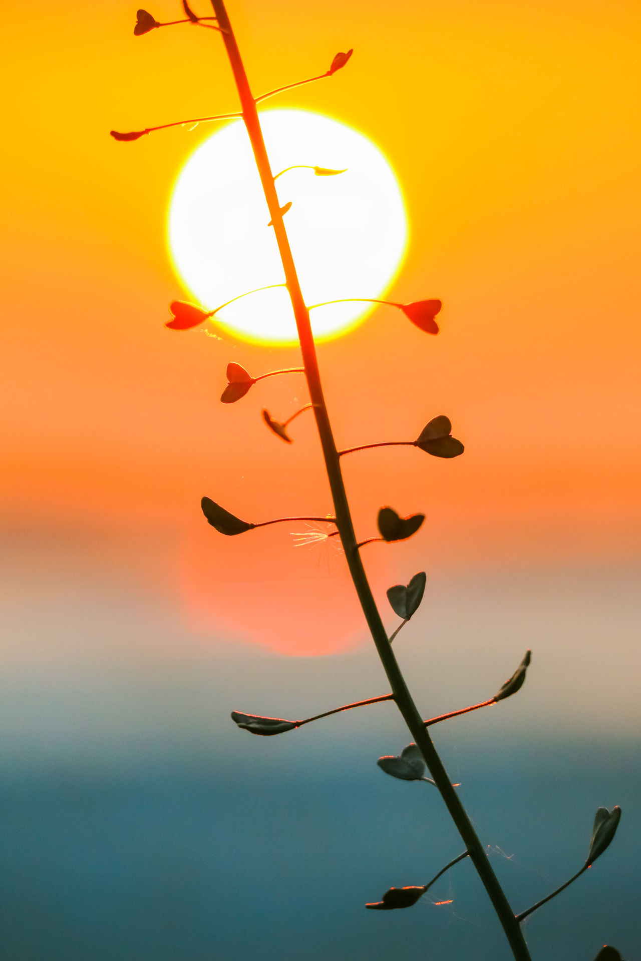 Hearts Beauty In Nature Close-up Colorful Flower Fragility Freshness Growth Heart Hearts Heartshape Leaf Love Love ♥ Nature Orange Color Outdoors Plant Silhouette Sky Sunset Sunset Silhouettes The Great Outdoors - 2017 EyeEm Awards Weed Weeds Are Beautiful Too