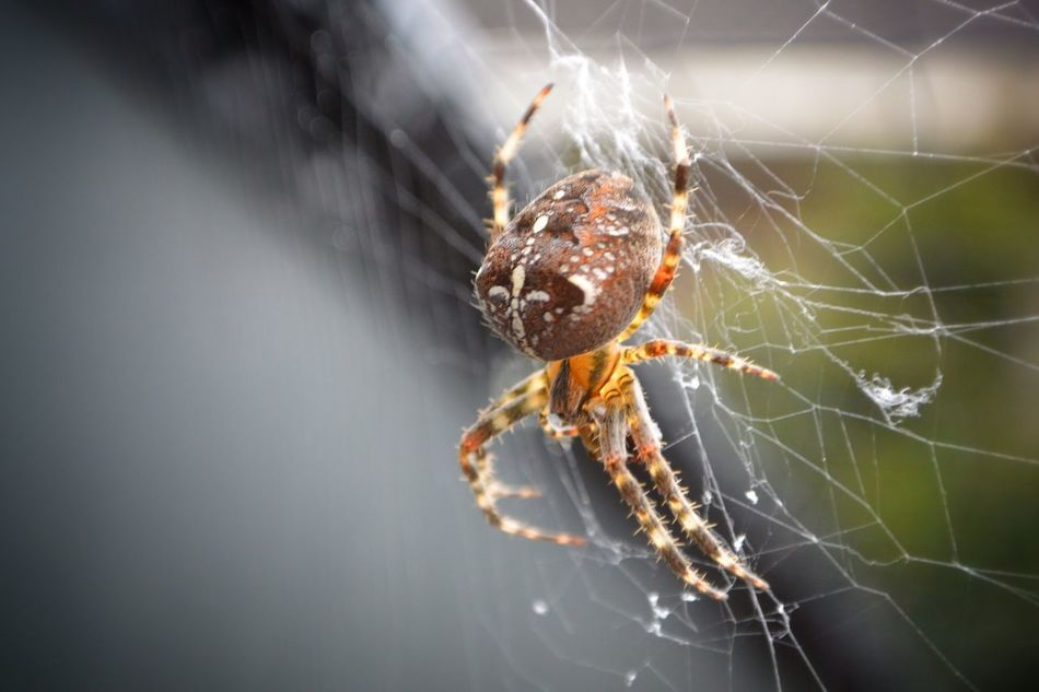 Spider Spiderweb Insects  Insect Photography