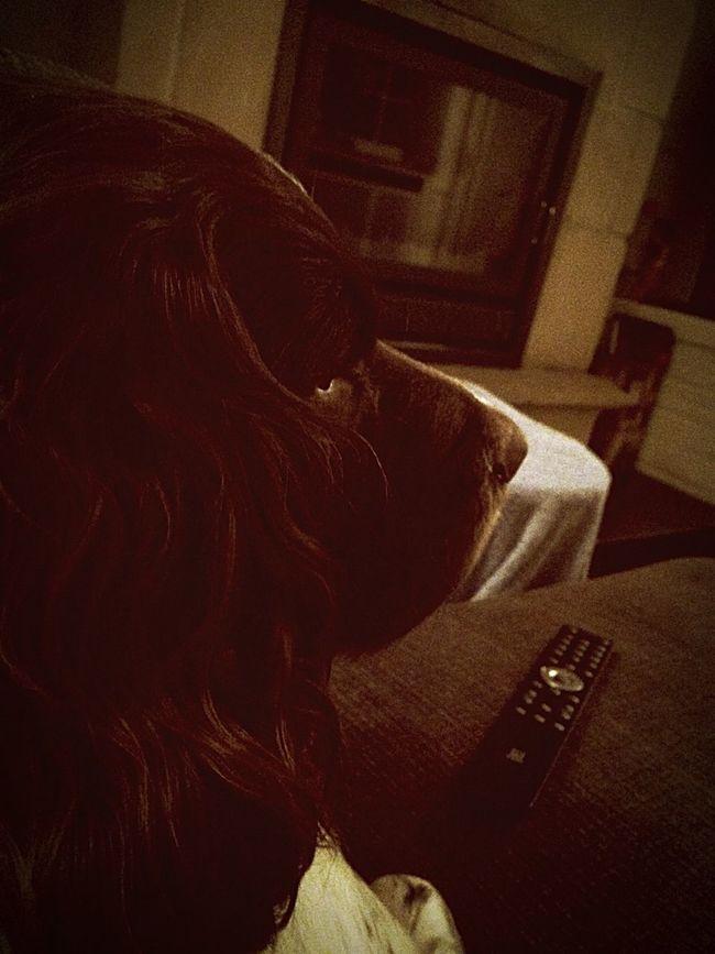 Hondje kamiel is Tv aant kijken, grrr First Eyeem Photo
